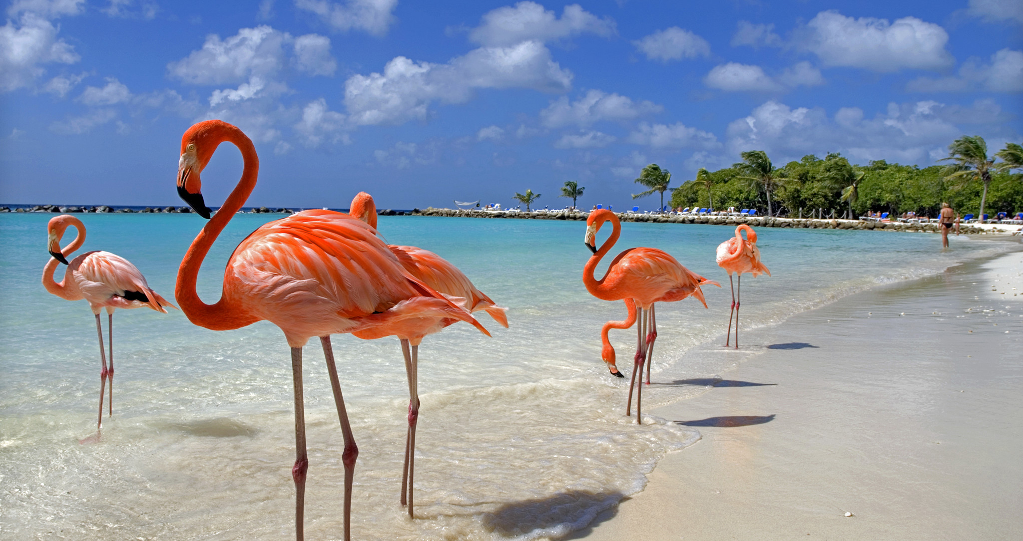 Image result for aruba